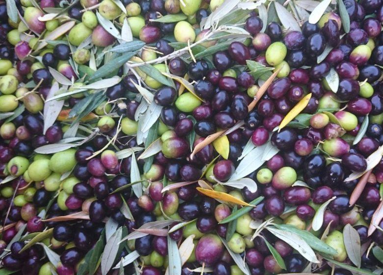 Domaine Souviou / Vin et huile d'olive