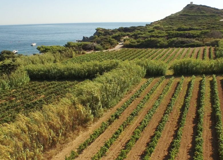 Domaine viticole de l'île des Embiez